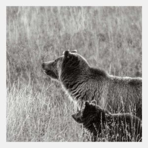 Bears, silver halide print, signed limited edition by Eugene Tapahe, Navajo